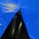 ldpe film blu nero